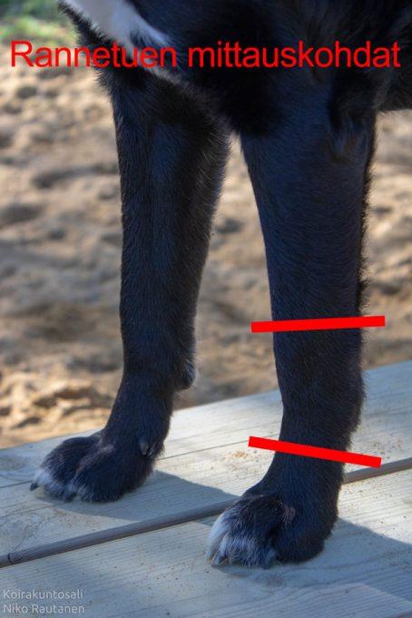 Koiran rannetuen mittauskohdat