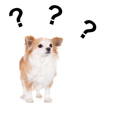 Taituki usein kysytyt kysymykset